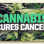 Cannabis clinic toronto, medicinal marijuana treatments – medical cannabis clinics corporation.